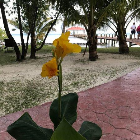 Hatchet Caye Resort: photo2.jpg