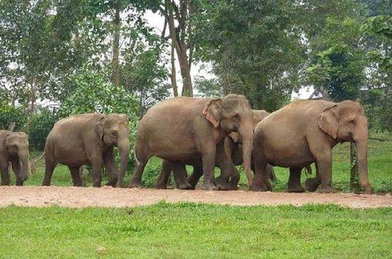 Private Tour: Kuala Gandah Elephant...