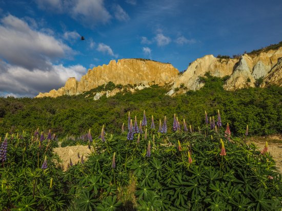 Clay Cliff: Lupines and cliffs on a perfect day
