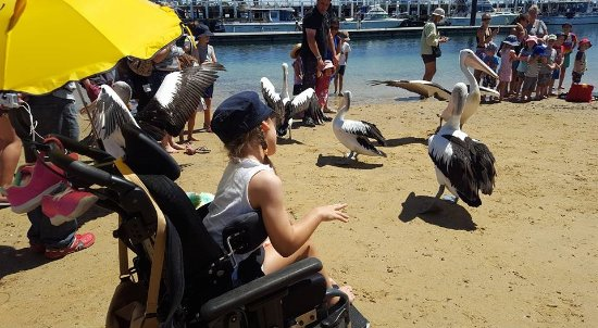 Cowes, Avustralya: Pelican feeding at San Remo Jetty. A ramp makes accessing the beach possible.