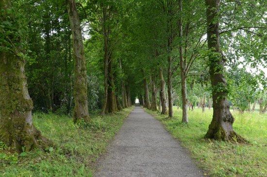 Saltram (National Trust): 400 Meter lange Lindenallee