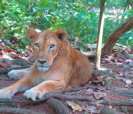 Neyyar Wild Life Sanctuary : Lion Safari Park