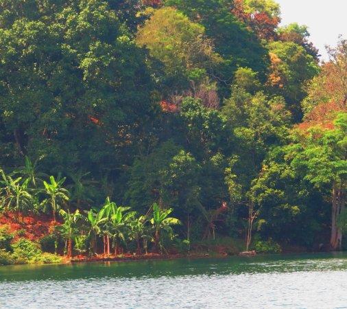 Neyyar Wild Life Sanctuary : Adjacent Dense Forest