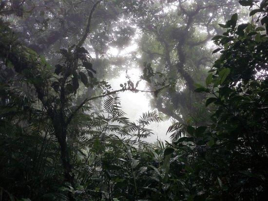 Granada, Nikaragua: Mombacho Volcano Cloud Forest