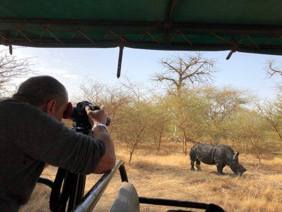 La Petite Cote, السنغال: Rhinocéros (sa corne a été coupée pour éviter qu'il ne se fasse tué par des braconniers)