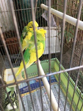 Bird Garden Yuanpu Street :  Bird Garden
