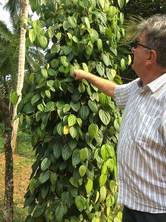 Jim's Farm Villas: Kevin explaining about pepper growing