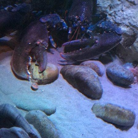 Sea Life Blackpool: photo0.jpg