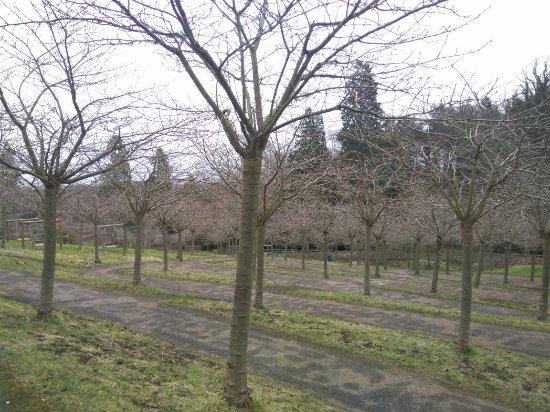 The Alnwick Garden: IMG_20180201_112006_large.jpg