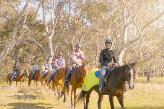 Greenvale, Australia: Woodlands Trail Riding facilitating a group tour.