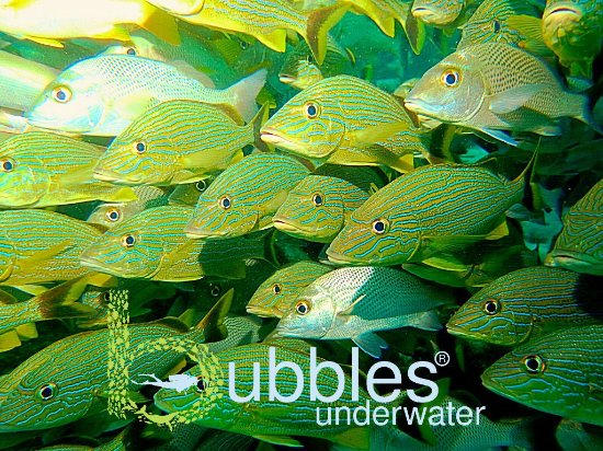 Bubbles Underwater