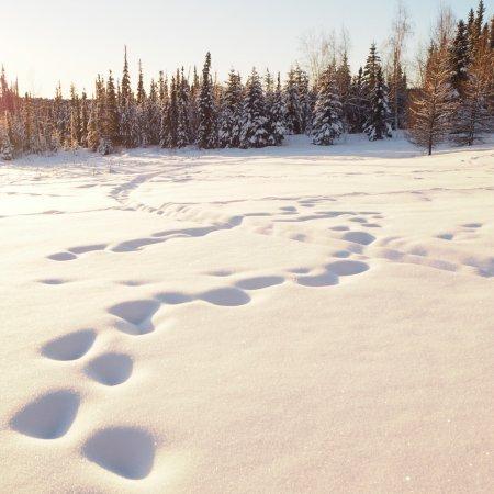 Ester, Аляска: photo1.jpg