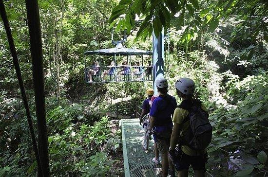 Rainforest Adventures 5 in 1