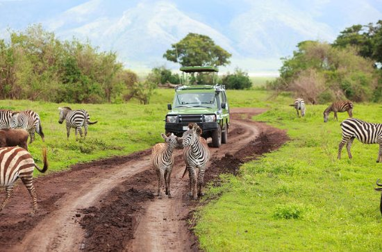 6-Day Safari to Southern Tanzania...