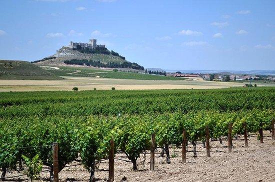 Recorrido vinícola Premium en Ribera...