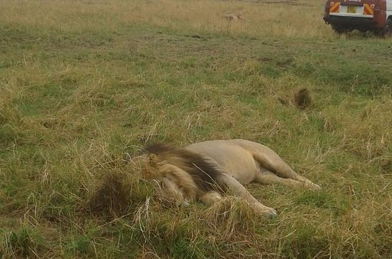 4 Days 3 Nights Group  safari to...