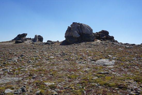 Tundra Communities Trail : Mushroom Rocks