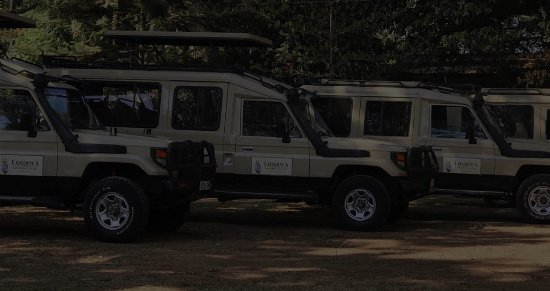 Losirwa Safaris (T) Ltd.
