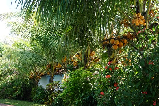 Mango Meadows Kottayam What To Know Before You Go
