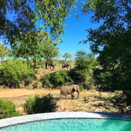 Фотография Imbali Safari Lodge