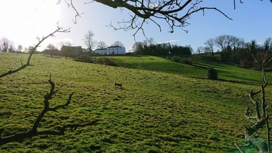 Sellack, UK: Views of Brooks Country House