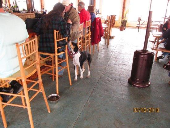 Eastpoint, FL: Dog friendly