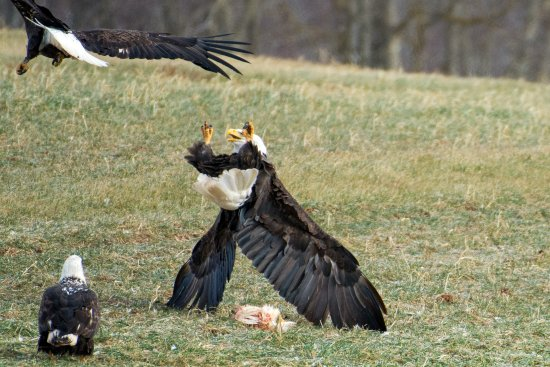 Images From Our Special Tour Event Eagle Watch 2018 Held