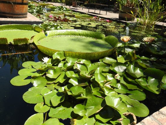 Dorp Street: Botanical Garden Tour Is Calming And A Great Stroll   10 Rand