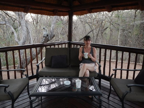Marloth Park, África do Sul: tomando um café na companhia dos macaquinhos.