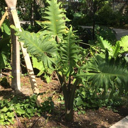 photo8.jpg - Picture of Miami Beach Botanical Garden, Miami Beach ...