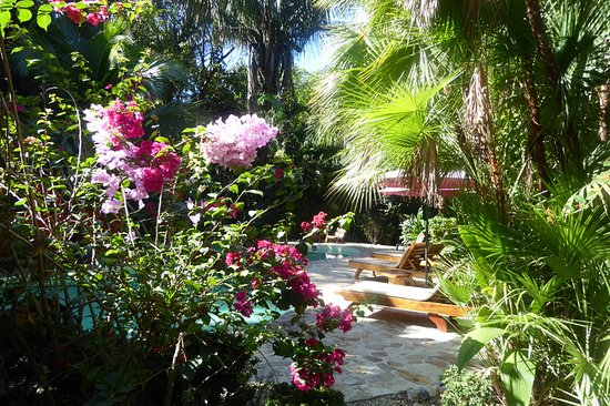 El Pequeno Gecko Verde Lush Tropical Plants Add Colour And Beauty To The Pool Area