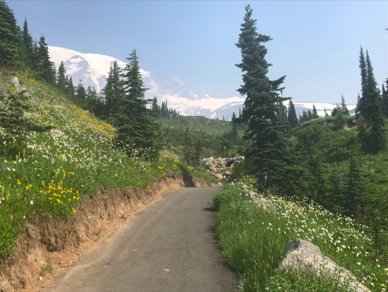 Paradise Valley: Slightly hazy but beautiful Mt Rainier in Paradise