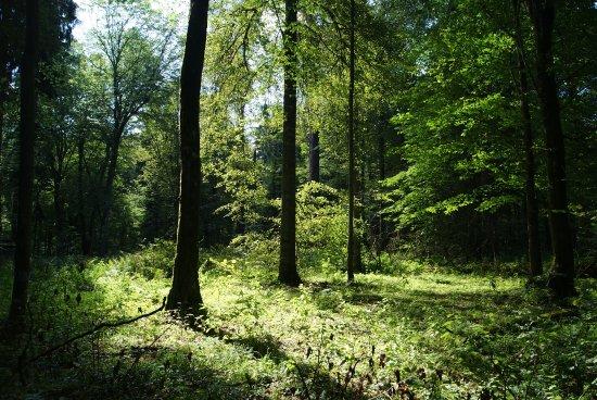 Zoledowo, Polen: Żołędowski las