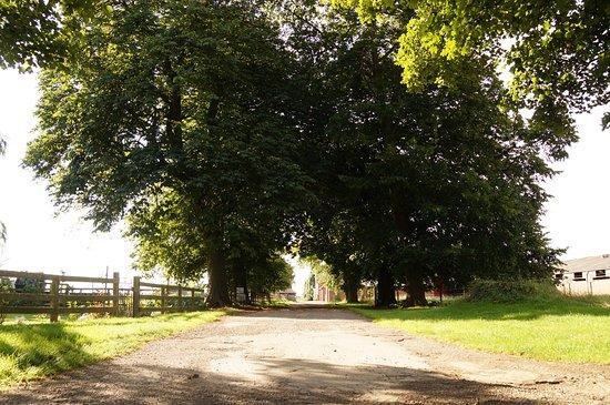 Helperby, UK: Driveway into Burton Grange.