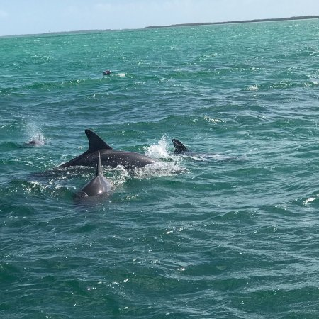Dolphin Safari : photo0.jpg