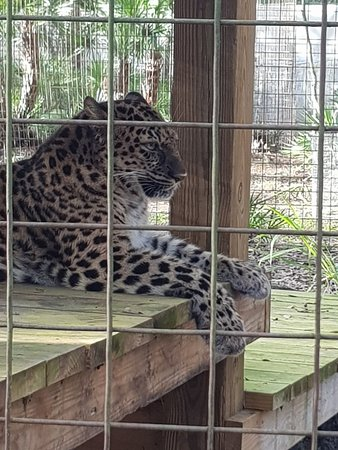 Review Of Big Cat Rescue Tour