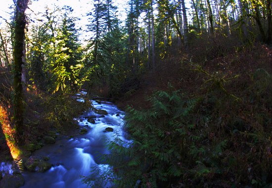 Lebanon, OR: View of the creek from the foot bridge