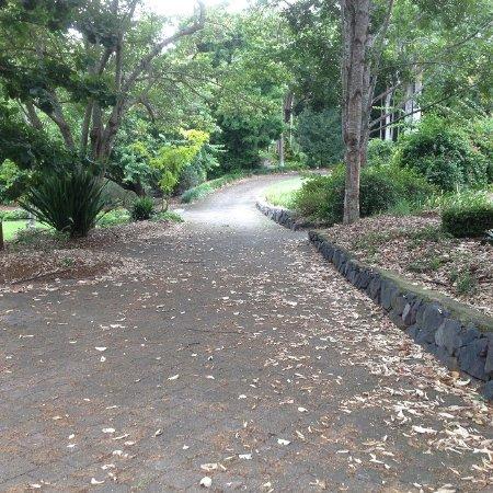 Noosa Botanic Gardens 사진