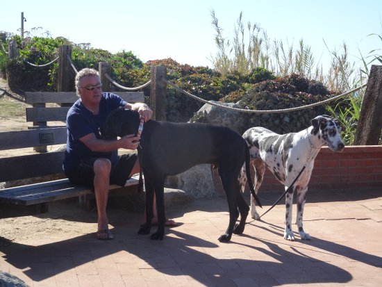 Del Mar, CA: Resident local with his king-sized canines