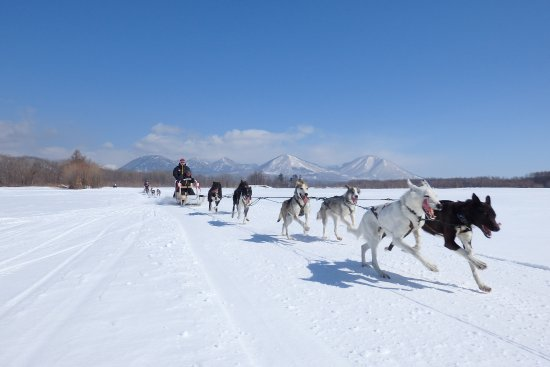 ‪Mushing Works Dog Sledding Tours‬