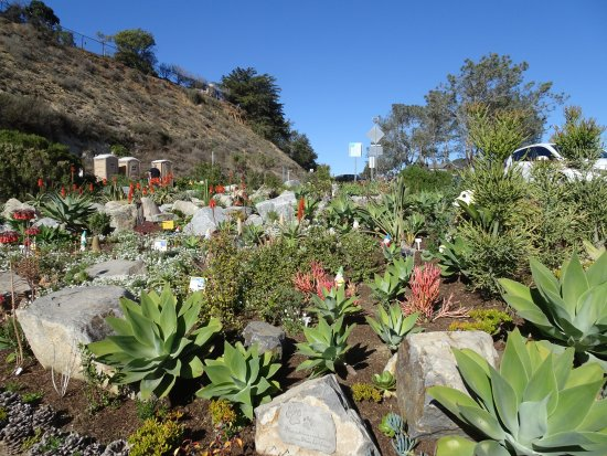 Del Mar, CA: Lovely gardens maintained by loving souls