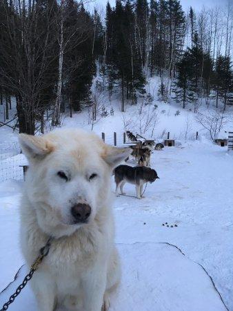 Entre chien et loup: photo0.jpg
