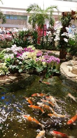 Orchid garden koi pond singapore top tips before you for Koi pool garden centre