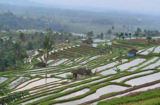 Bali Unesco World Heritages Jatiluwih...