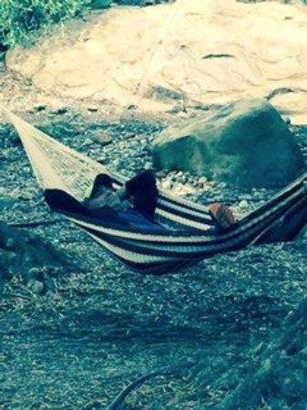 Ojai, Kaliforniya: Taking a nap!