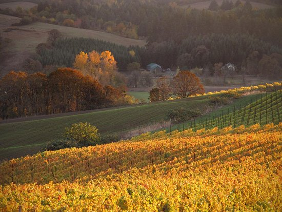Yamhill, Oregón: Autumn is perhaps the most beautiful season in the vineyard.