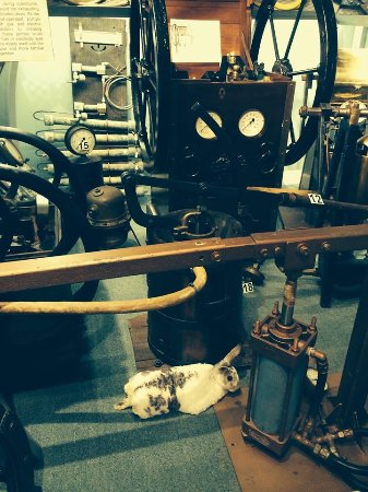 History of Diving Museum : My rabbit, Narvik; doesn't want to go home yet.....