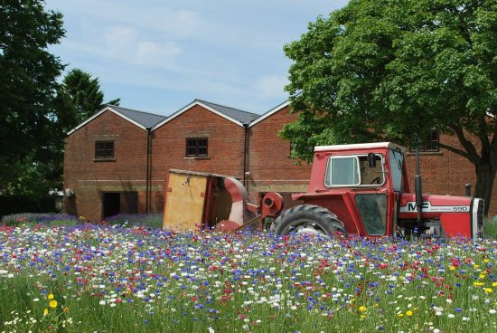 Alton, UK: Tractor in our wild flowers