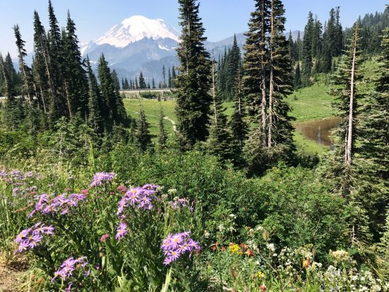 Tipsoo Lake Loop : Wildflowers and Tipsoo Lake views
