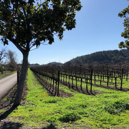 Kunde Family Winery: photo4.jpg